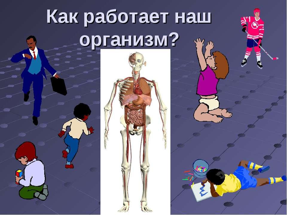 Как работает наш организм?