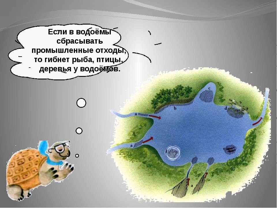 Если в водоёмы сбрасывать промышленные отходы, то гибнет рыба, птицы, деревья...