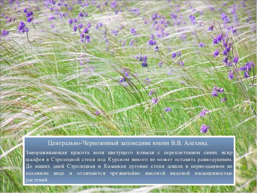 Центрально-Черноземный заповедник имени В.В. Алехина. Завораживающая красота ...