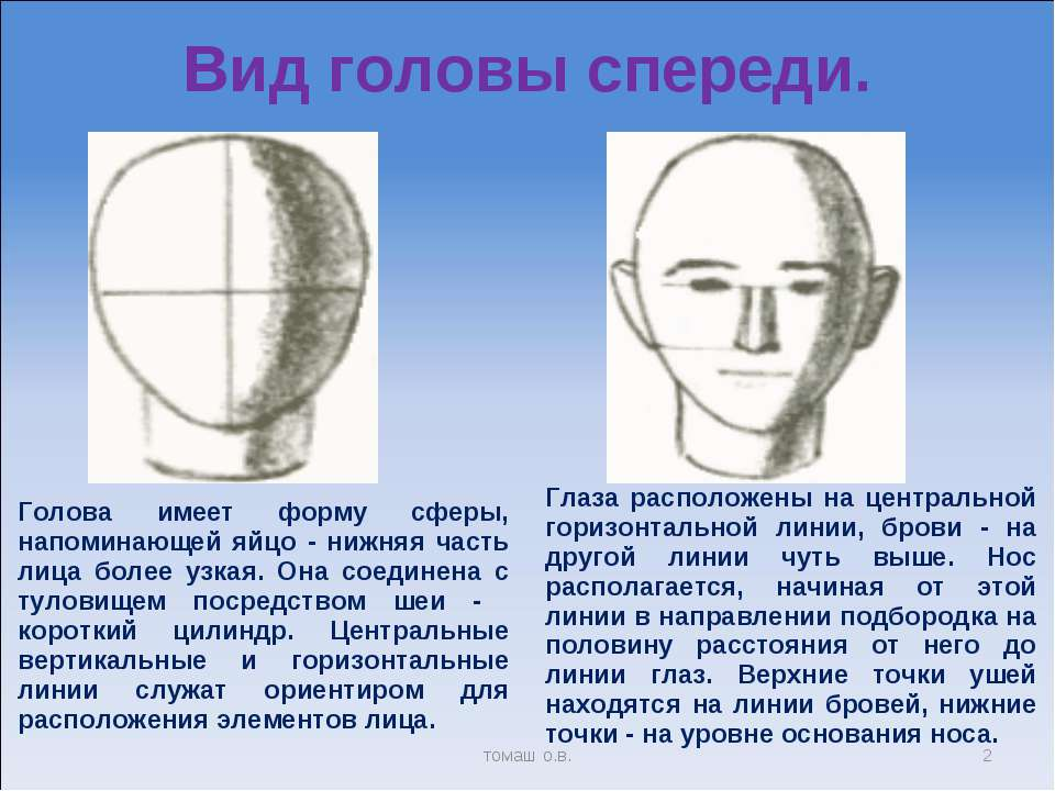 Вид головы спереди. * томаш о.в. Голова имеет форму сферы, напоминающей яйцо ...