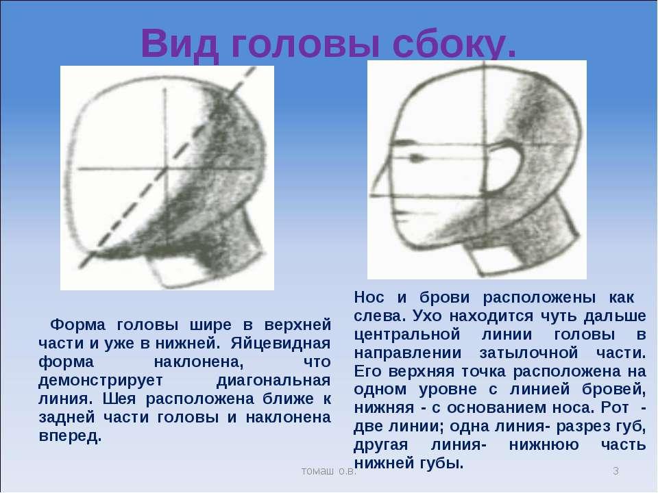 Вид головы сбоку. * томаш о.в. Форма головы шире в верхней части и уже в нижн...