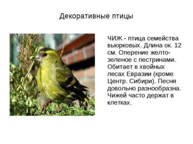 Декоративные птицы ЧИЖ - птица семейства вьюрковых. Длина ок. 12 см. Оперение...