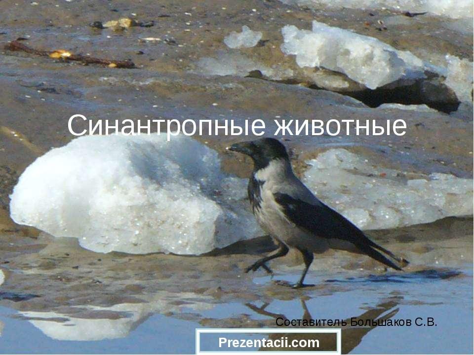Синантропные животные Составитель Большаков С.В.