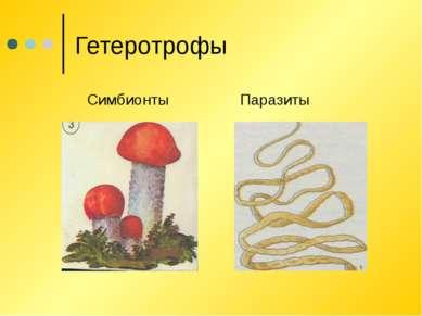Гетеротрофы Симбионты Паразиты