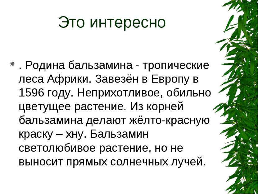 Это интересно . Родина бальзамина - тропические леса Африки. Завезён в Европу...