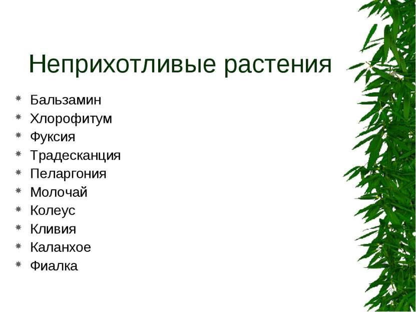 Неприхотливые растения Бальзамин Хлорофитум Фуксия Традесканция Пеларгония Мо...