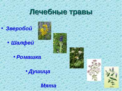 Лечебные травы Зверобой Шалфей Ромашка Душица Мята