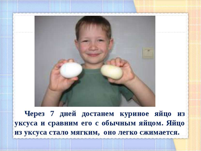 Через 7 дней достанем куриное яйцо из уксуса и сравним его с обычным яйцом. Я...