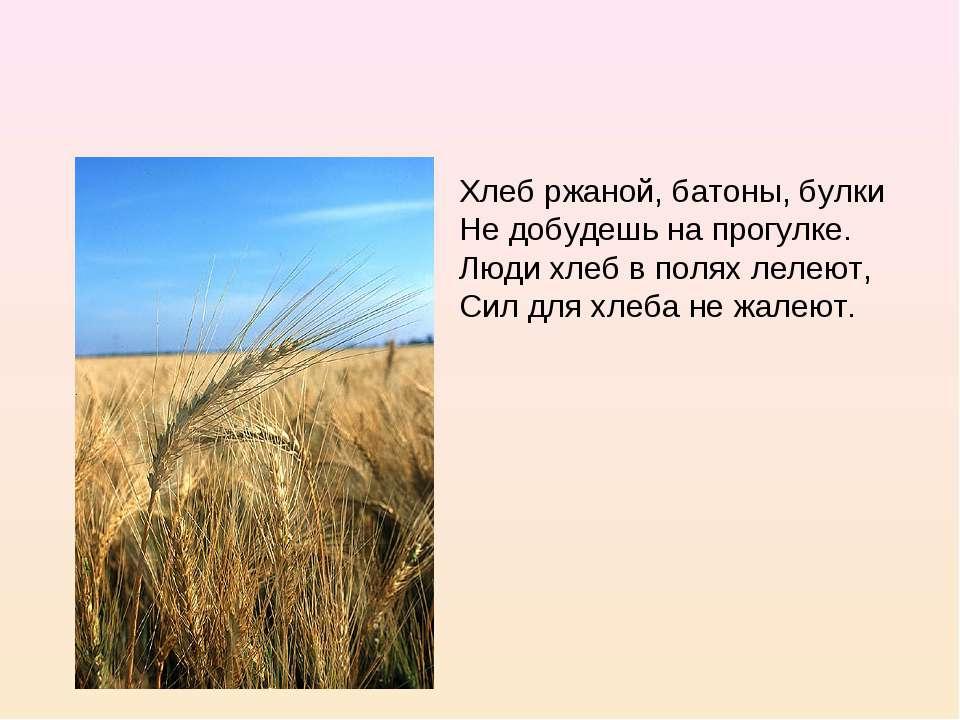 Хлеб ржаной, батоны, булки Не добудешь на прогулке. Люди хлеб в полях лелеют,...