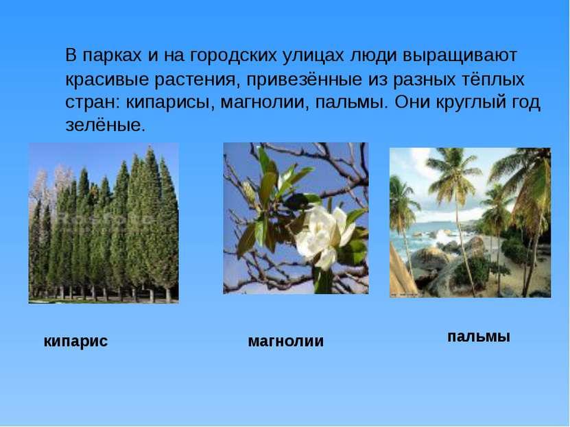 В парках и на городских улицах люди выращивают красивые растения, привезённые...