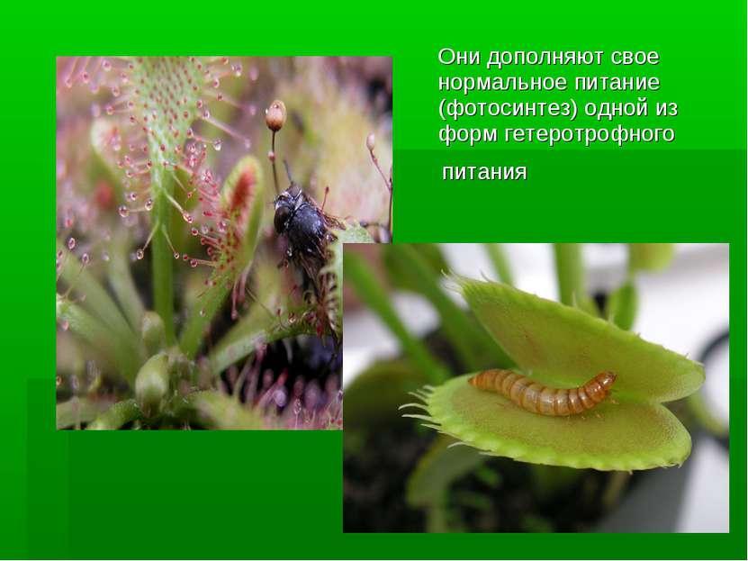 Они дополняют свое нормальноепитание (фотосинтез) одной из формгетеротрофно...