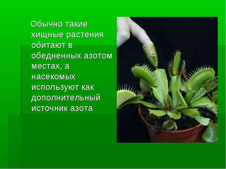 Обычно такие хищные растения обитают в обедненных азотом местах, а насекомых ...