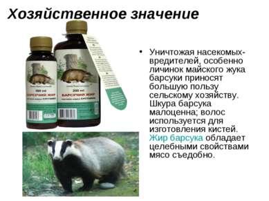 Хозяйственное значение Уничтожая насекомых-вредителей, особенно личинокмайск...