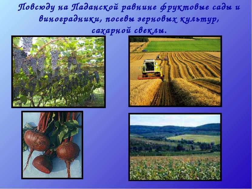 Повсюду на Паданской равнине фруктовые сады и виноградники, посевы зерновых к...