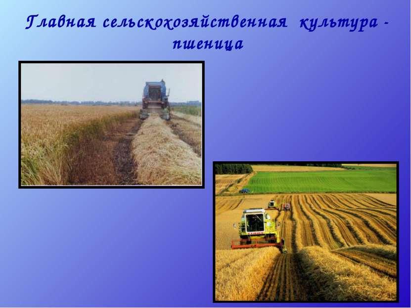 Главная сельскохозяйственная культура - пшеница