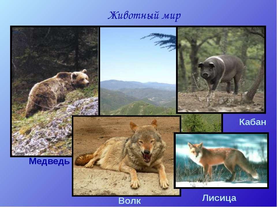 Животный мир Апеннин Медведь Волк Кабан Лисица