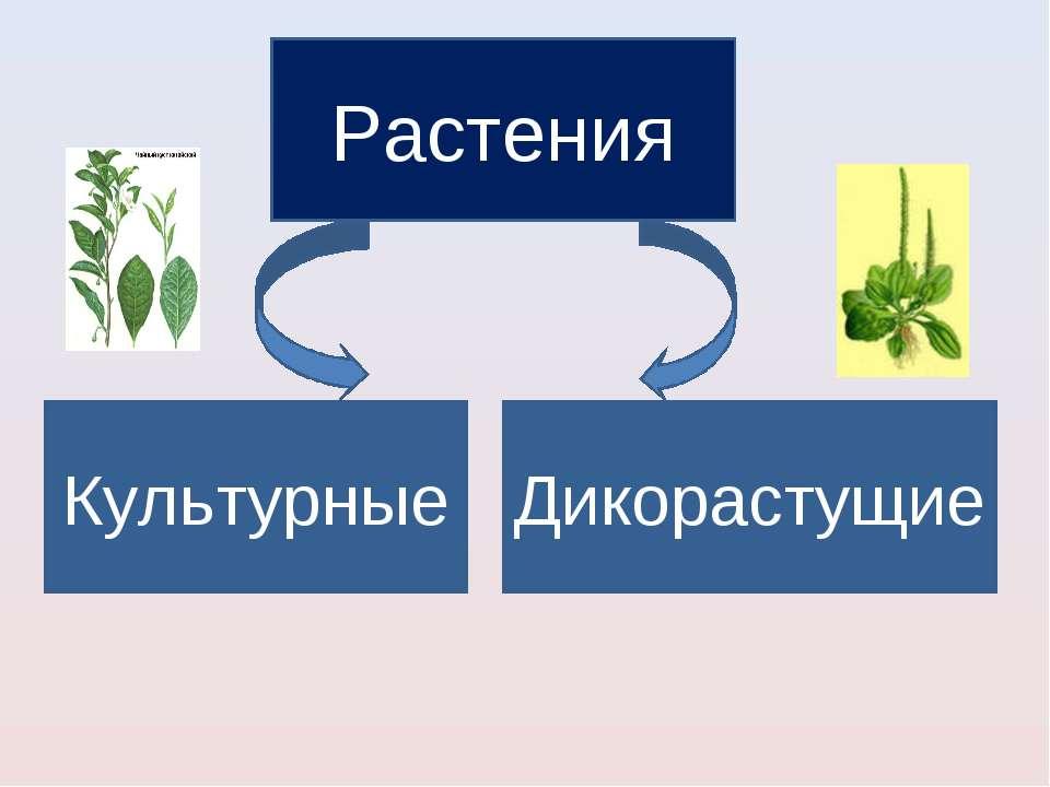 Растения Культурные Дикорастущие