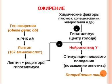 Ген ожирения (obese gene; ob) м-РНК ob Химические факторы (глюкоза, холецисто...