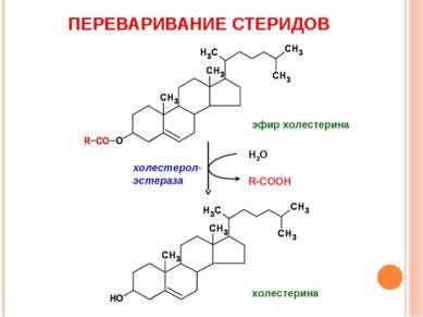 ПЕРЕВАРИВАНИЕ СТЕРИДОВ Н2О R-COOH холестерол-эстераза эфир холестерина холест...