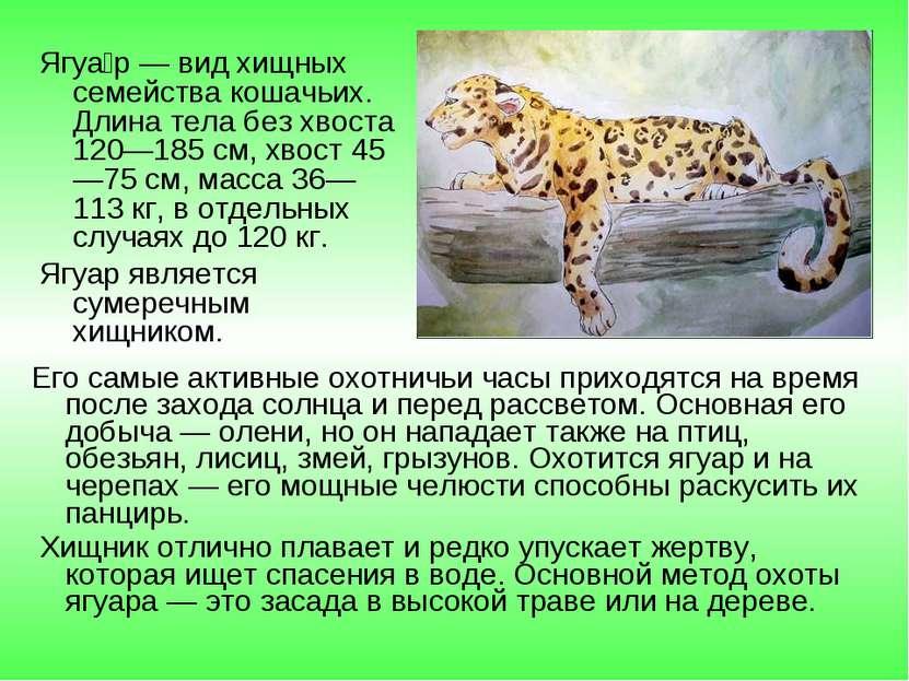Ягуа р — вид хищных семейства кошачьих. Длина тела без хвоста 120—185 см, хво...