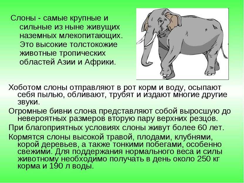 Слоны - самые крупные и сильные из ныне живущих наземных млекопитающих. Это в...