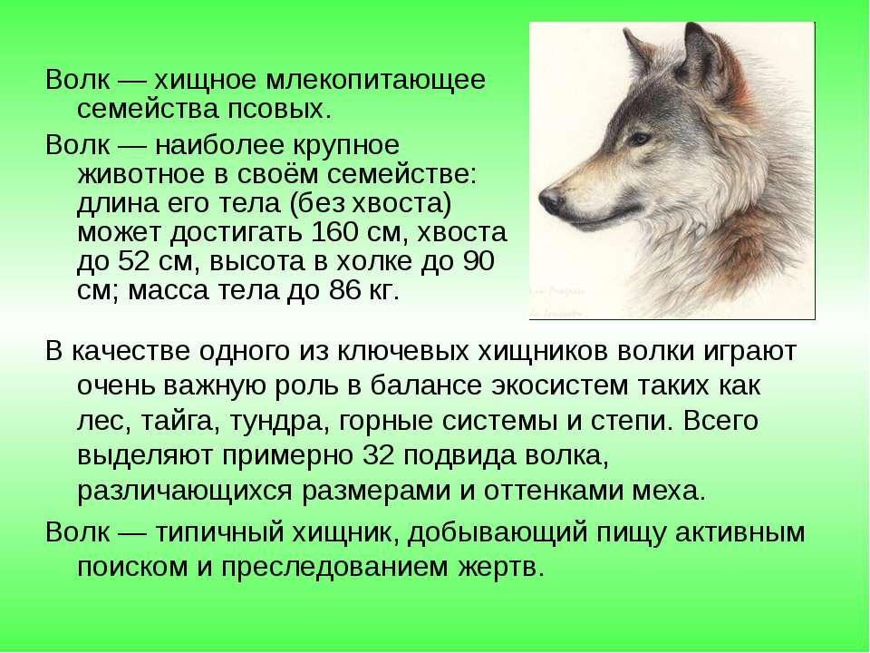 В качестве одного из ключевых хищников волки играют очень важную роль в балан...