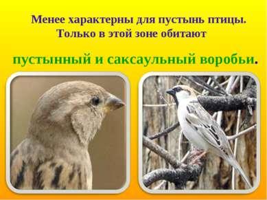 Менее характерны для пустынь птицы. Только в этой зоне обитают пустынный и са...