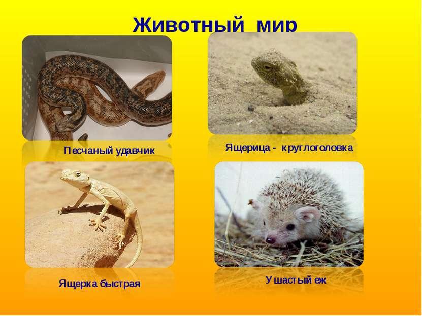 Животный мир Песчаный удавчик Ящерка быстрая Ящерица - круглоголовка Ушастый еж