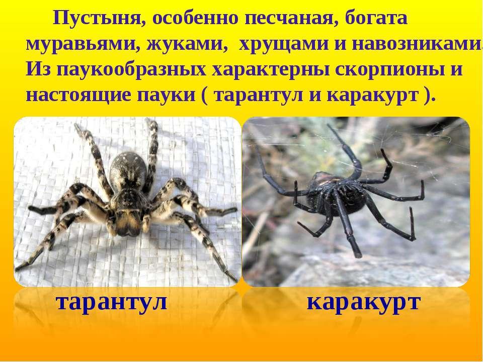 Пустыня, особенно песчаная, богата муравьями, жуками, хрущами и навозниками. ...