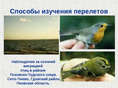 Способы изучения перелетов Кольцевание Наблюдение на пролетах Радиолокация На...
