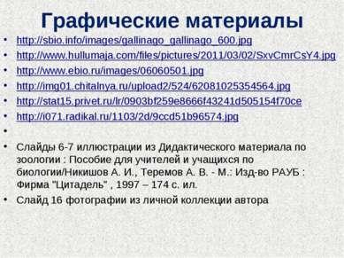 Графические материалы http://sbio.info/images/gallinago_gallinago_600.jpg htt...