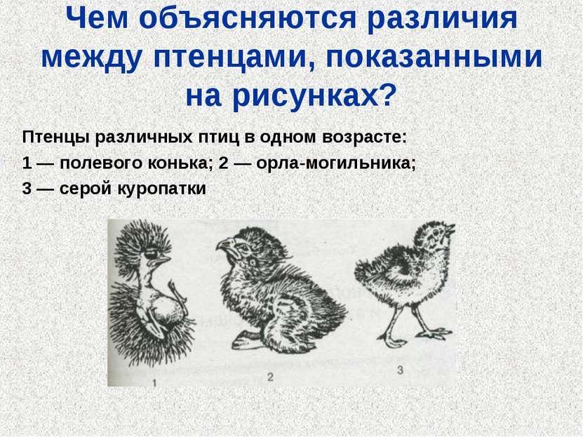 Чем объясняются различия между птенцами, показанными на рисунках? Птенцы разл...