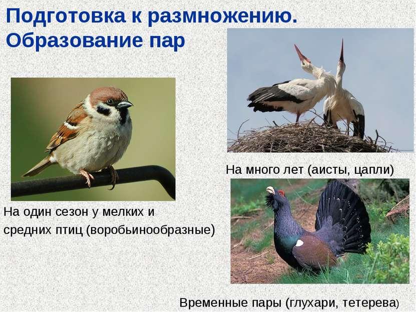 Подготовка к размножению. Образование пар На один сезон у мелких и средних пт...