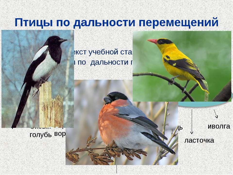 Птицы по дальности перемещений Прочитайте текст учебной статьи, составьте схе...