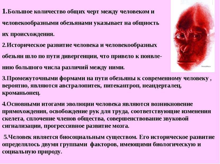 1.Большое количество общих черт между человеком и человекообразными обезьянам...