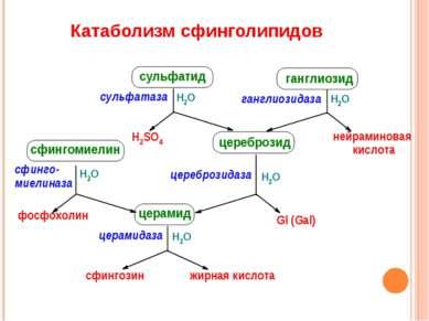 Катаболизм сфинголипидов