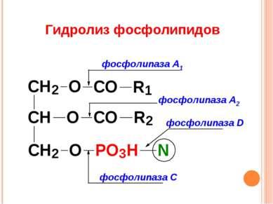 Гидролиз фосфолипидов