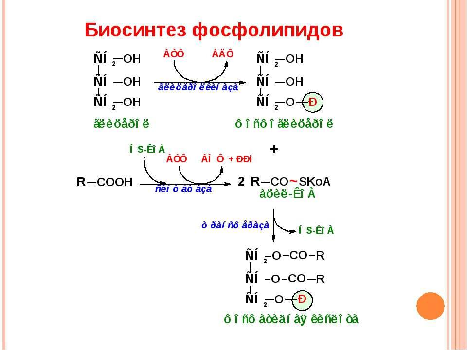 Биосинтез фосфолипидов