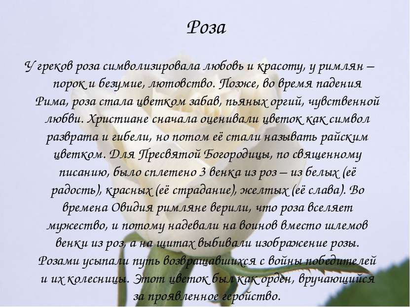 Роза У греков роза символизировала любовь и красоту, у римлян – порок и безум...