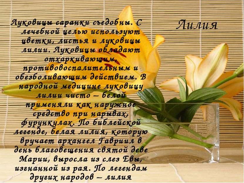 Лилия Луковицы саранки съедобны. С лечебной целью используют цветки, листья и...