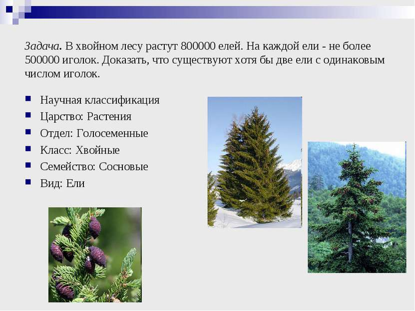 Задача. В хвойном лесу растут 800000 елей. На каждой ели - не более 500000 иг...