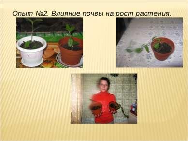 Опыт №2. Влияние почвы на рост растения.
