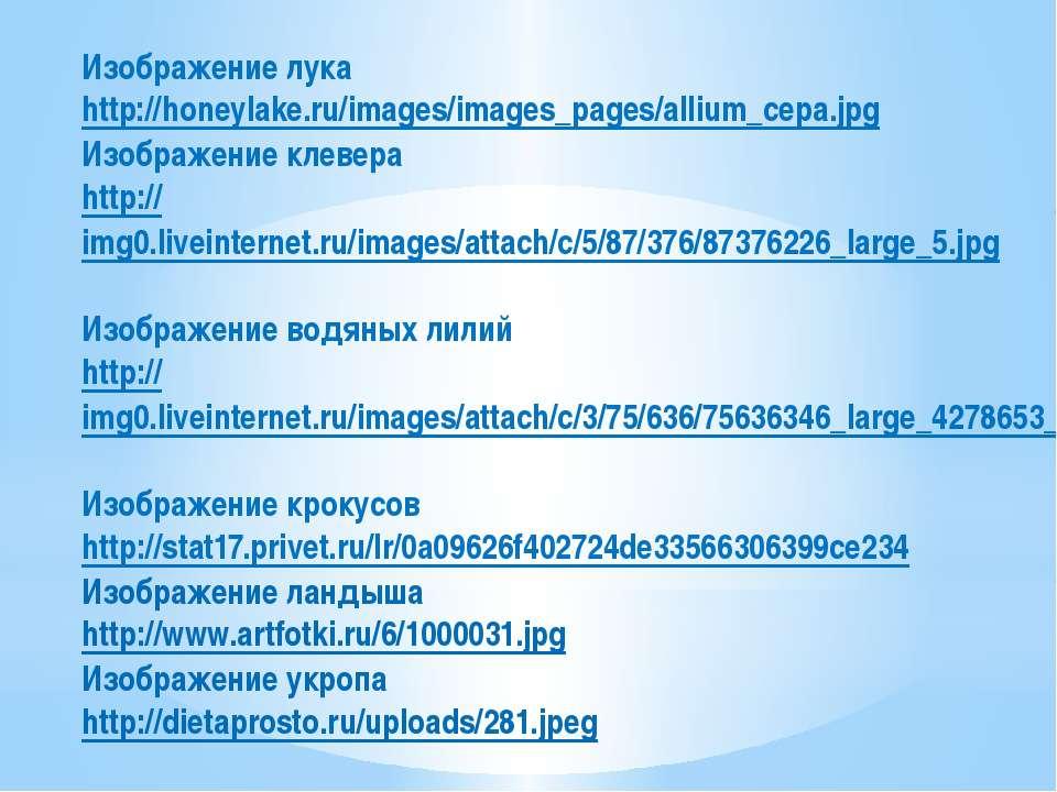 Изображение лука http://honeylake.ru/images/images_pages/allium_cepa.jpg Изоб...