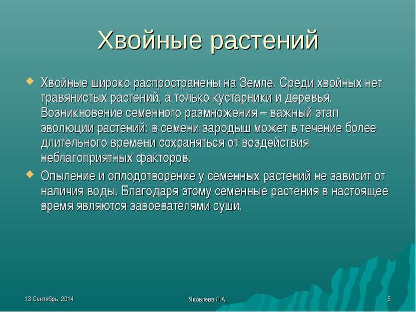 * Яковлева Л.А. * Хвойные растений Хвойные широко распространены на Земле. Ср...