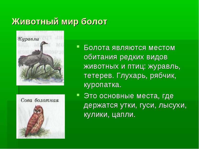 Животный мир болот Болота являются местом обитания редких видов животных и пт...