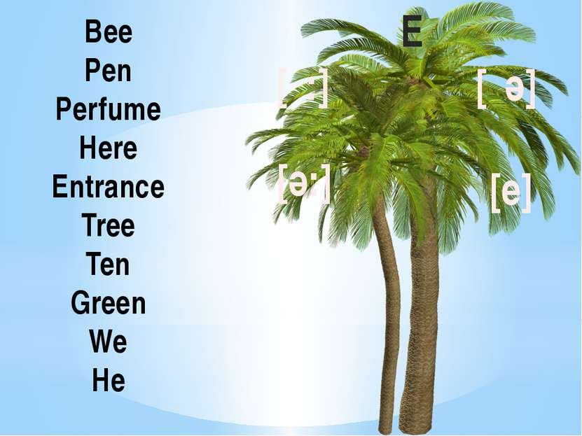Bee Pen Perfume Here Entrance Tree Ten Green We He E [ι:] [ә:] [ιә] [e]