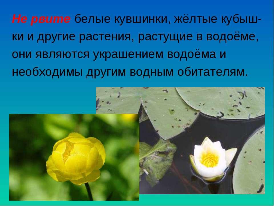 Не рвите белые кувшинки, жёлтые кубыш- ки и другие растения, растущие в водоё...