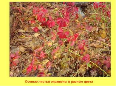 Осенью листья окрашены в разные цвета