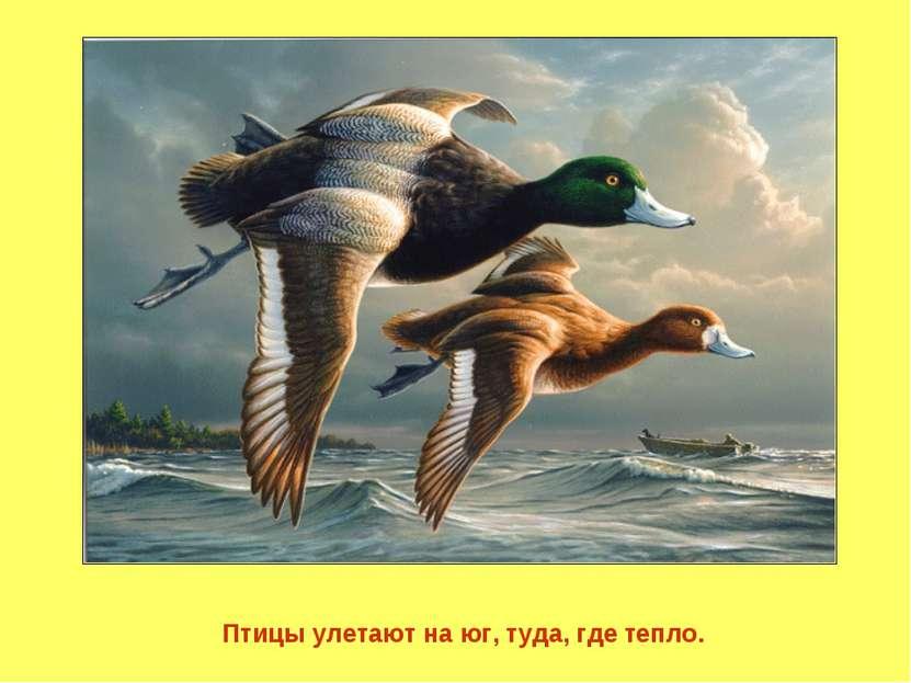 Птицы улетают на юг, туда, где тепло.