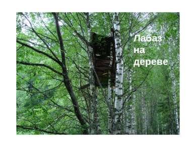 Лабаз на дереве